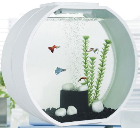 Deco o mini fish tank mj hub pte ltd for Deco aquarium