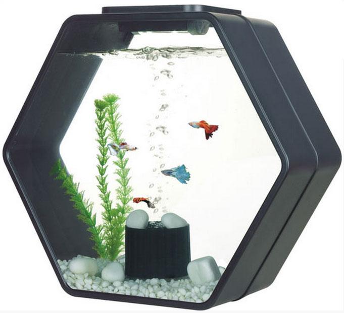 déco hexo aquarium